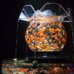 Самые необычные домашние аквариумы