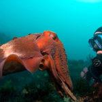 Суперсила морских животных
