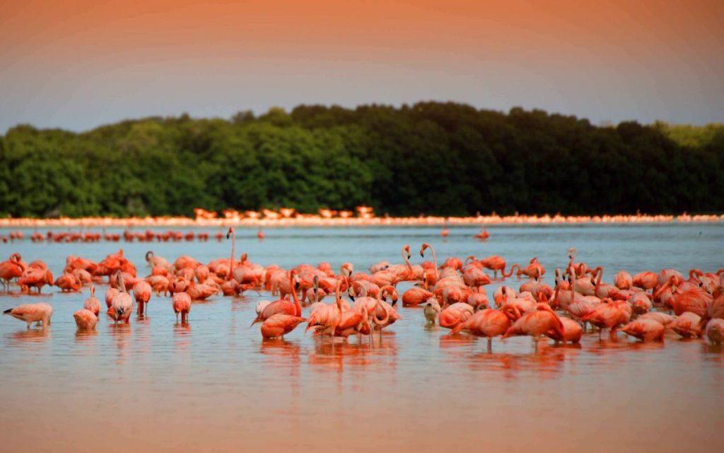 Розовое озеро, Юкатан
