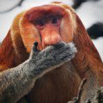 Животные с большими носами