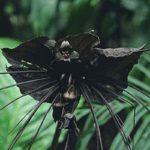 10 Самых Редких Цветов В Мире