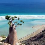 Потусторонняя красота острова Сокотра