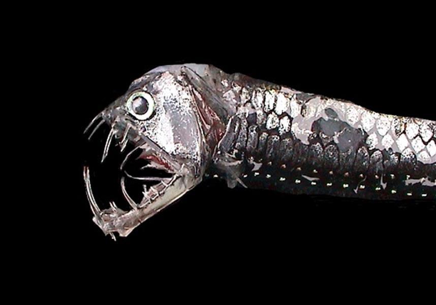 Топ-10 Самых Страшных Глубоководных Существ