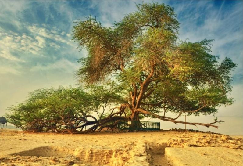Древо Жизни, Бахрейн