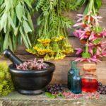 Самые Мощные Лекарственные Растения