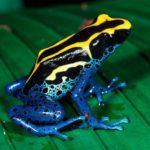 10 самых ядовитых животных в мире