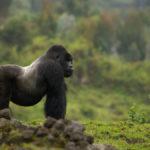 10 Животных, Которые Могут Исчезнуть Навсегда