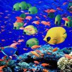 Самые красивые рыбки в мире