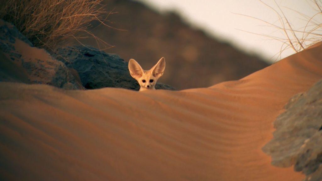 Животные Сахары