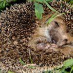 Животные, которые впадают в зимнюю спячку