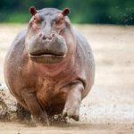 10 Самых Агрессивных Животных В Мире