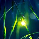 10 удивительных биолюминесцентных животных