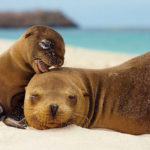 10 Эндемичных Животных Галапагосских Островов