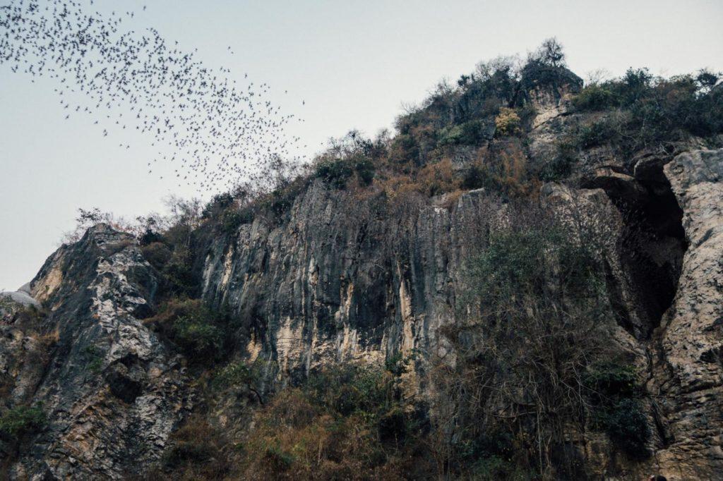 Пещеры летучих мышей Баттамбанга