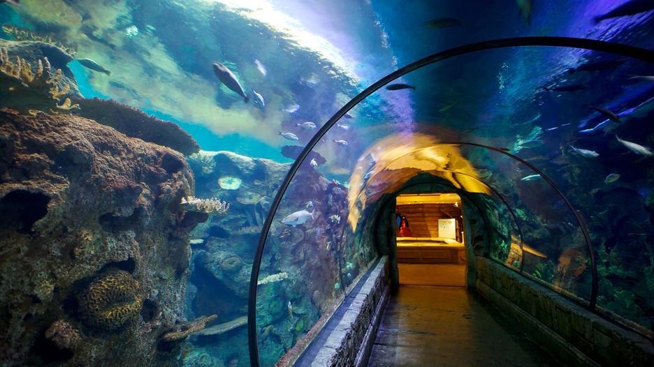 Аквариум Акульего Рифа, Mandalay Bay