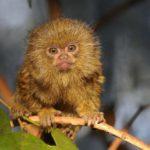 10 самых интересных видов обезьян