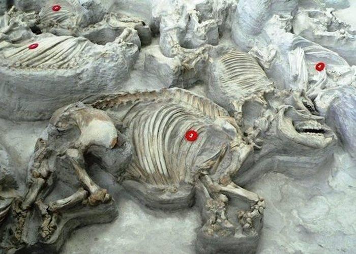 Массовая могила животных