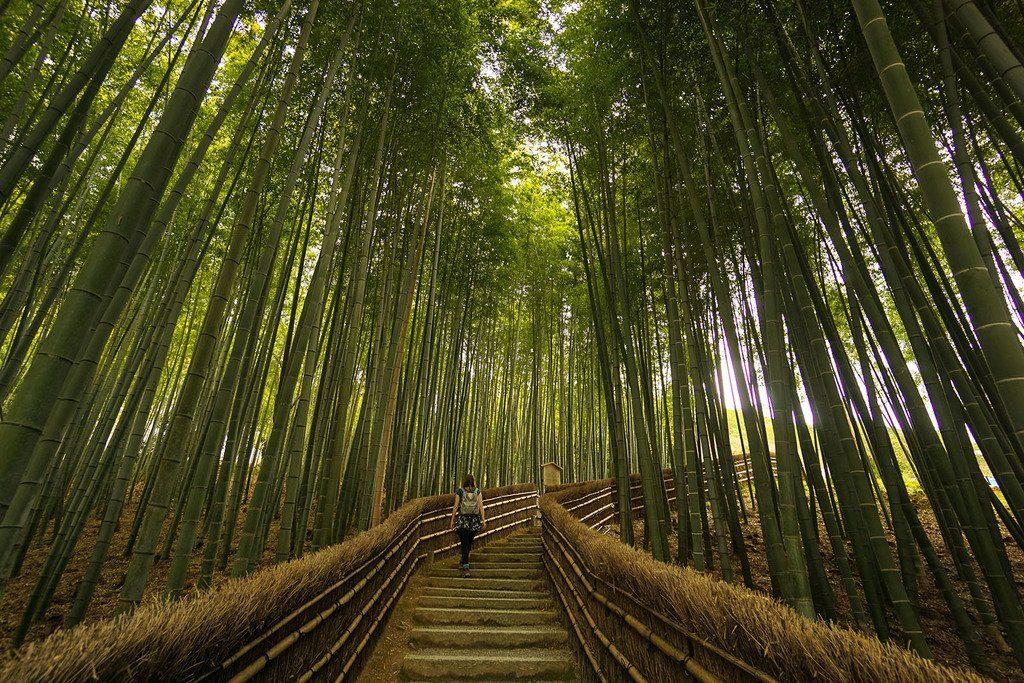 Бамбуковая Роща Арасияма, Киото, Япония