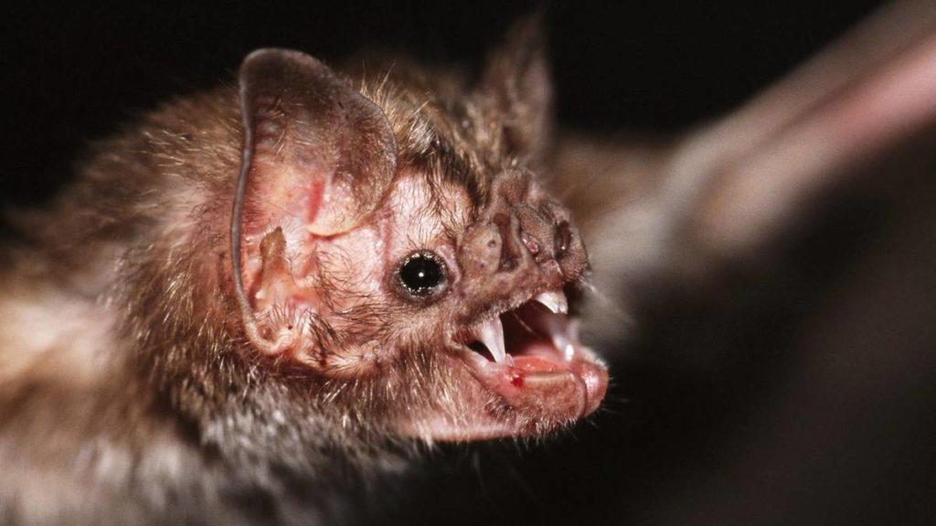 Летающая мышь-вампир