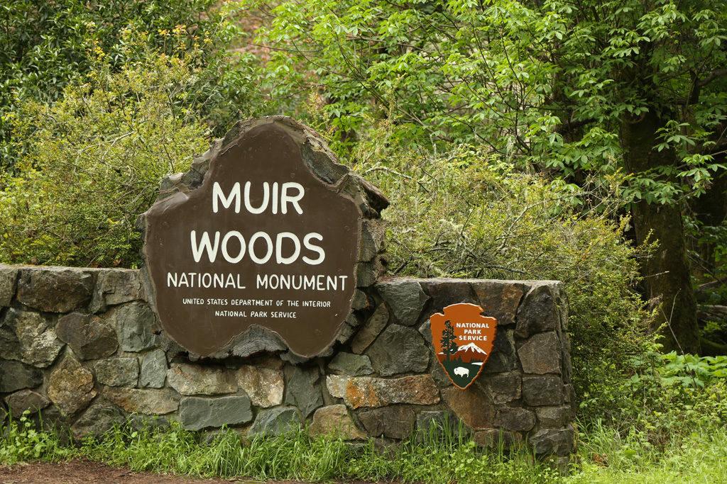 Мьюир Вудс Национальный Памятник