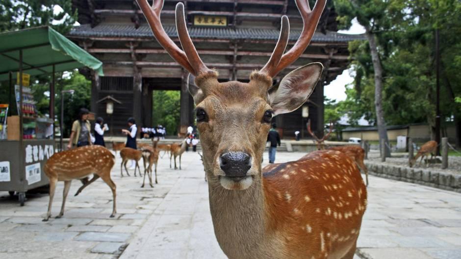 Нара парк, Япония