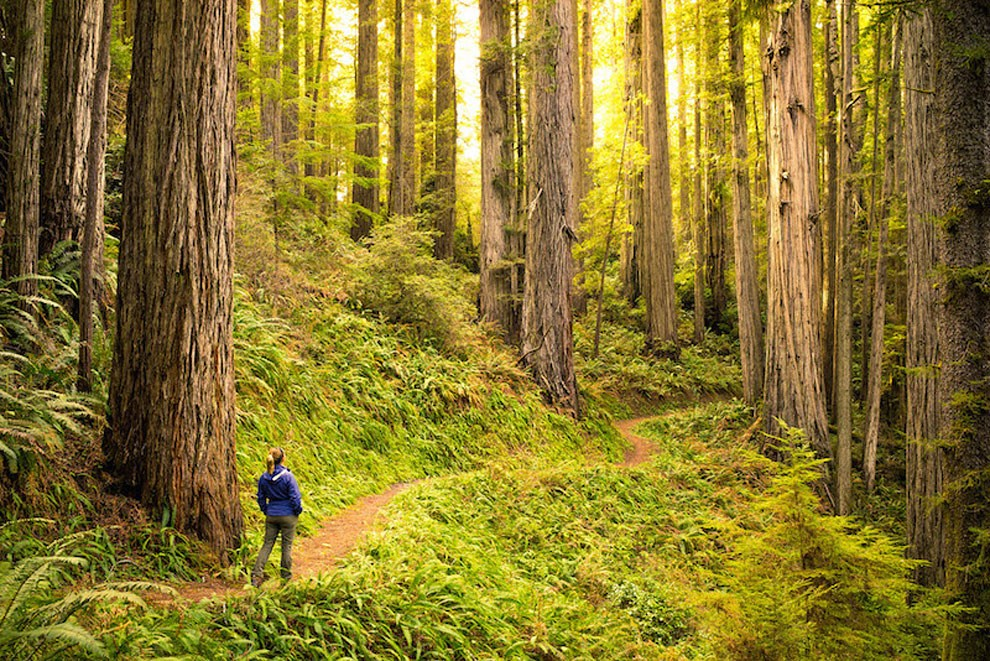 Национальный Парк Редвуд, Калифорния, США