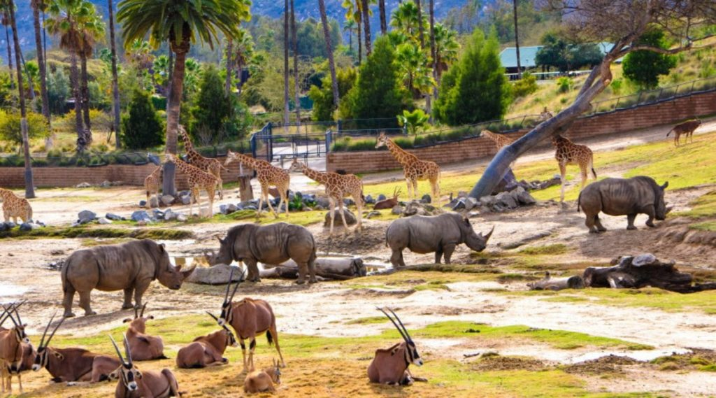 Сафари-Парк В Зоопарке Сан-Диего