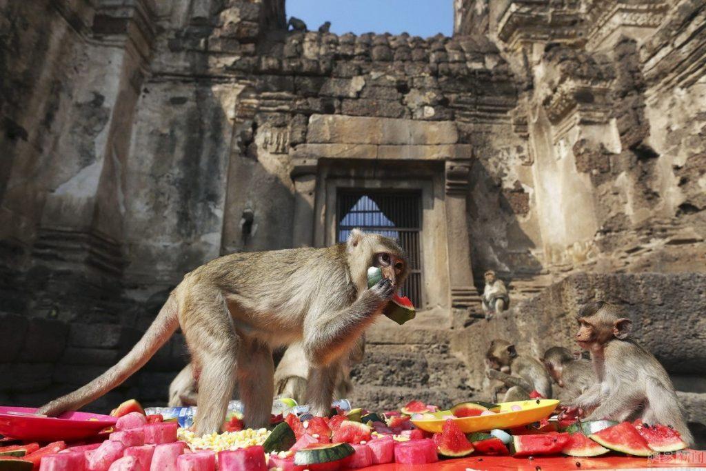 ежегодном фестивале обезьян в Таиланде