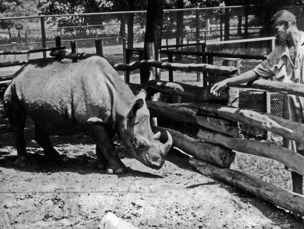 носорог по имени Какареко