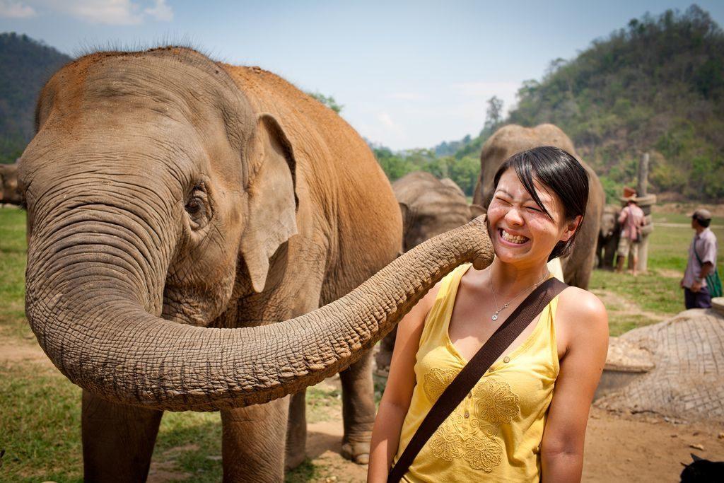 Elephant Nature Park Таиланда