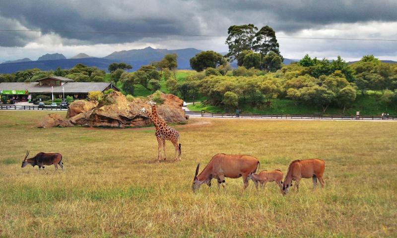 Национальный Парк Кабарсено