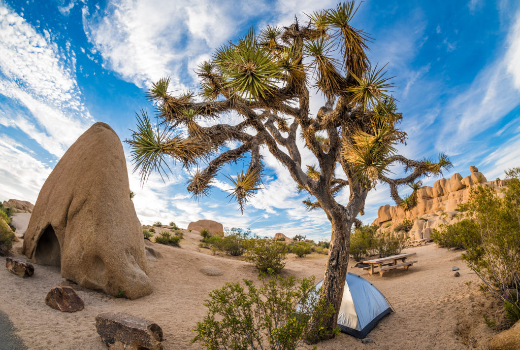 Joshua Tree Национальный парк, США