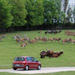 8 Лучших Зоопарков Мира