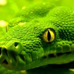 Самые Опасные Животные Тропических Лесов Амазонки