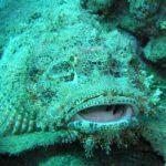 10 самых смертоносных рыб в мире
