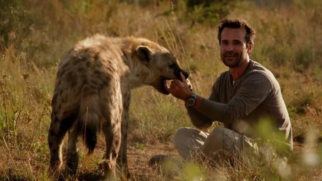 Что делать при встрече с дикими собаками