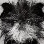 10 Самых Популярных Немецких Пород Собак
