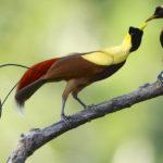 Животные с самой необычной тактикой спаривания