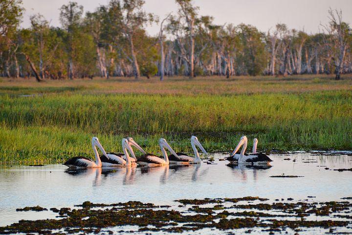 Водно-болотные угодья Какаду