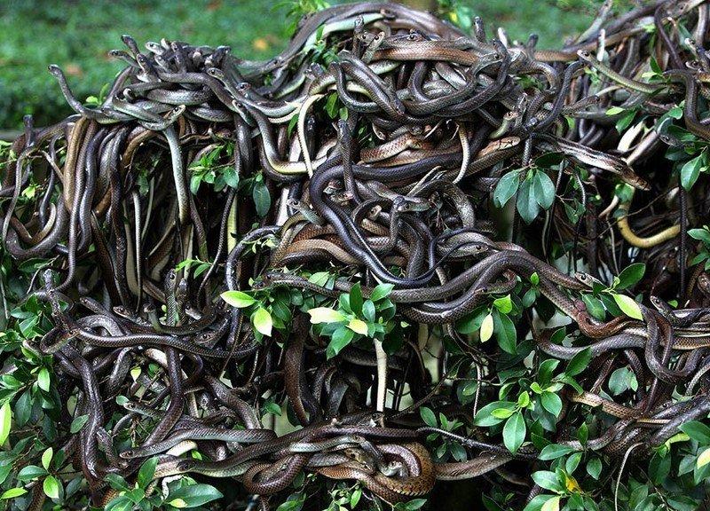 Кеймада Гранде - остров змей