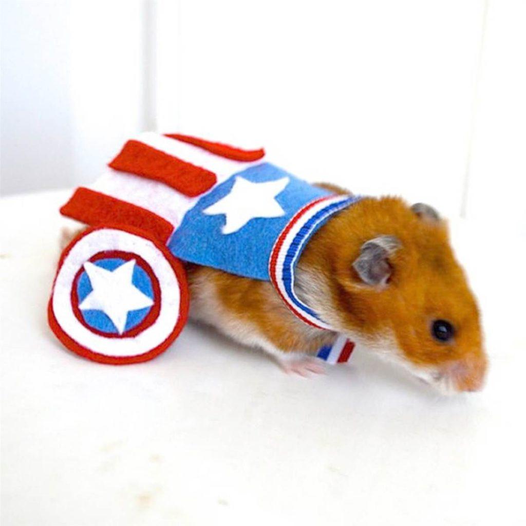 Костюм для хомяка - Капитан Америка