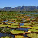 10 основных водно-болотных угодий в мире
