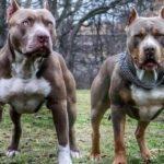 10 опасных пород собак