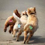 Причудливые Аксессуары Для Домашних Животных