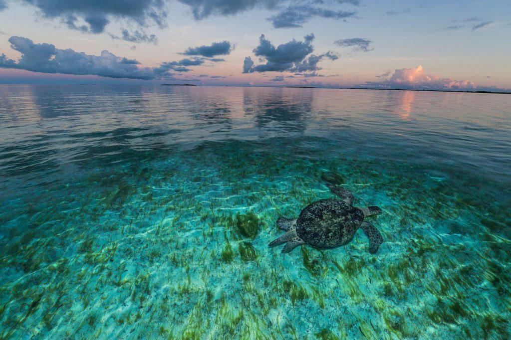 Атолл Альдабра, Сейшельские острова