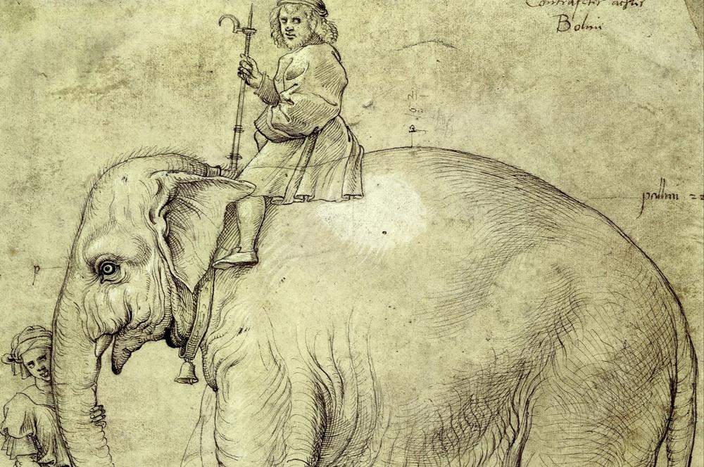 Белый слон Папы