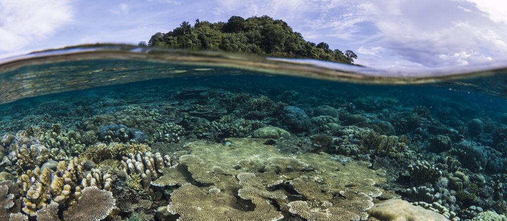 Северный Риф Эмма, Папуа-Новая Гвинея