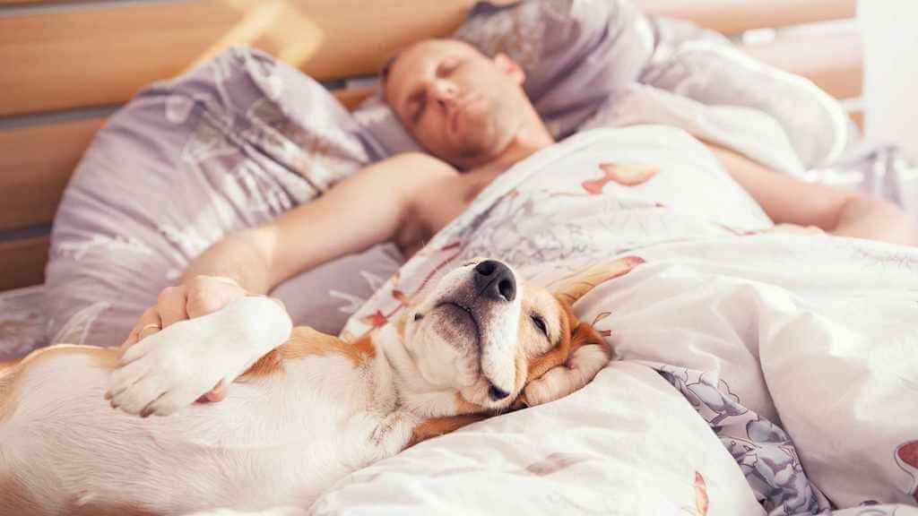Сон с домашними животными в США