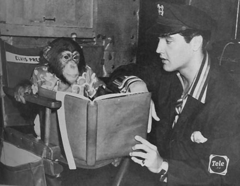 У Элвиса Пресли было несколько необычных питомцев