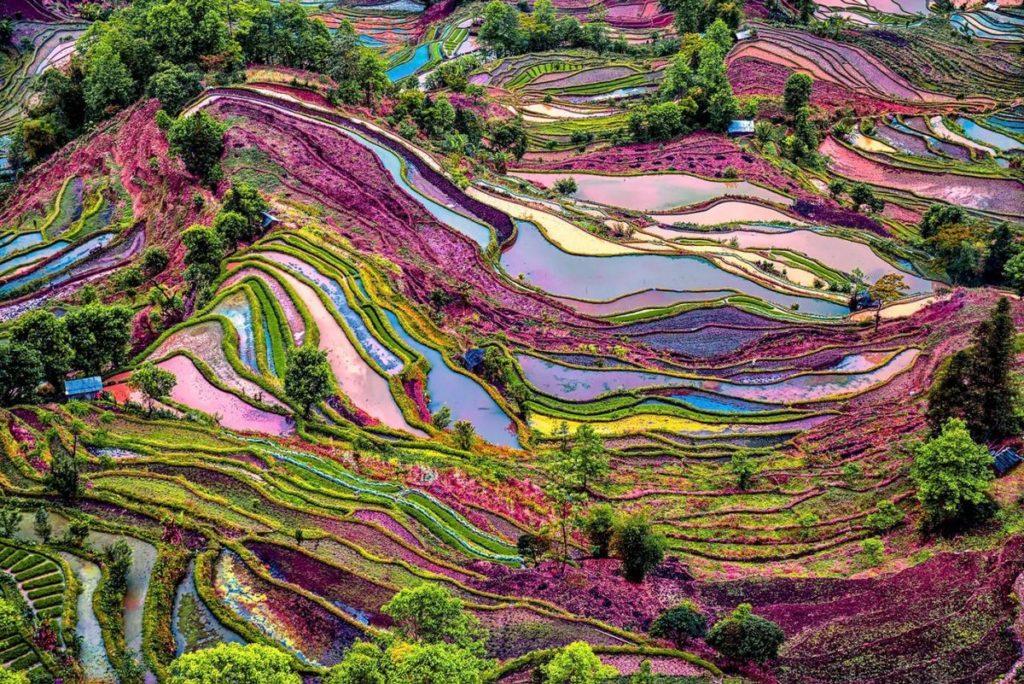 Хунхэ-Хани рисовые террасы, Китай